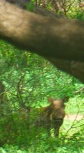Closer shot